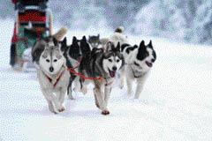 Avventure sulla Neve Sleddog